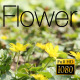 The Flower Field 5 - VideoHive Item for Sale