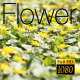 The Flower Field 8 - VideoHive Item for Sale