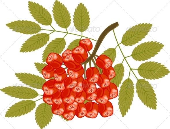 GraphicRiver Rowanberry 7537301