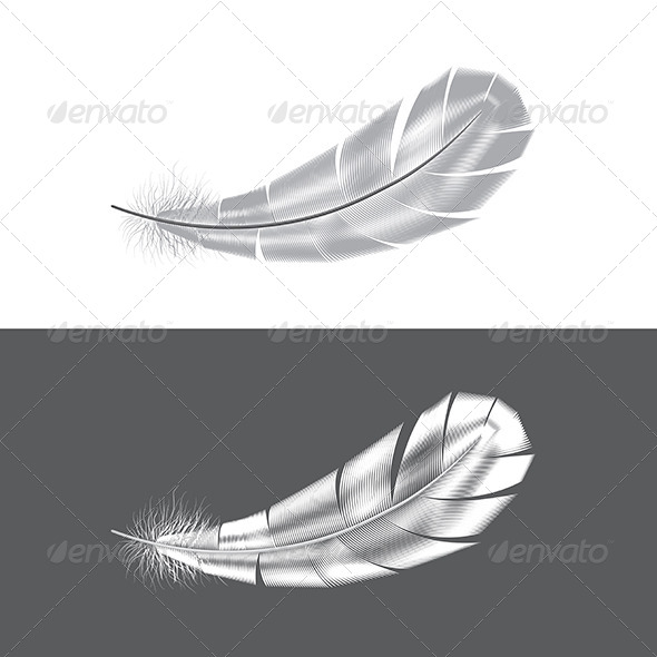 GraphicRiver Grey and White Feathers 7550549