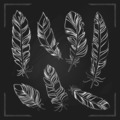 Feathers drawn with chalk on a blackboard - PhotoDune Item for Sale