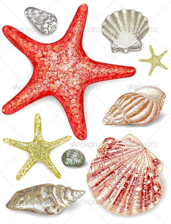 GraphicRiver Set of Seashells 7568099