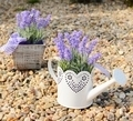 Lavender decoration - PhotoDune Item for Sale