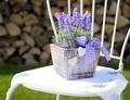 Lavender decoration - PhotoDune Item for Sale