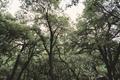 trees in Yoesmite - PhotoDune Item for Sale