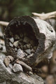 Rocks in hollow tree stump - PhotoDune Item for Sale