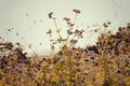 viney field of purple flowers - PhotoDune Item for Sale