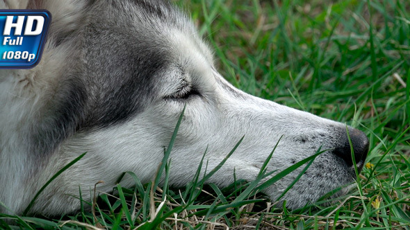 Muzzle of a Dog that Rests