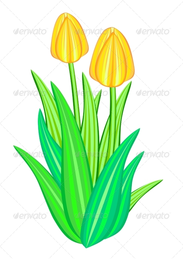 GraphicRiver Tulip Flower 7573943