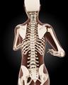Female medical skeleton - PhotoDune Item for Sale