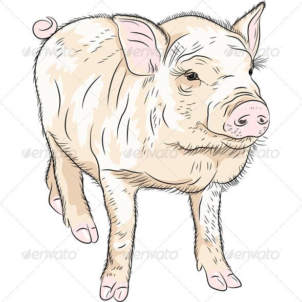GraphicRiver Closeup Portrait of Piggy 7575981