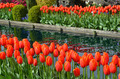 Red tulips and pond - PhotoDune Item for Sale