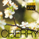 Spring Flowering Cherry 5 - VideoHive Item for Sale