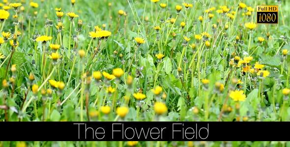 The Flower Field 9