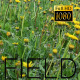 The Flower Field 13 - VideoHive Item for Sale