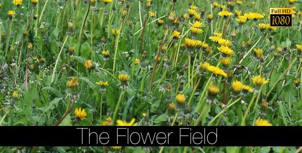 The Flower Field 13