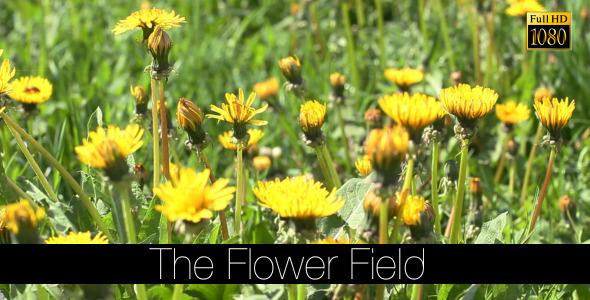 The Flower Field 14