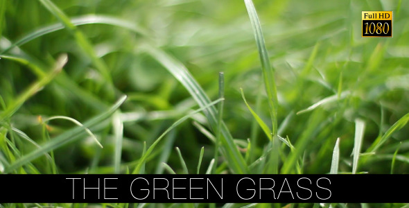 The Green Grass 11