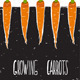 Download Vector Growing Carrots Freehand Drawing and Lettering