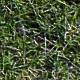 Ground covered with grass - 3DOcean Item for Sale