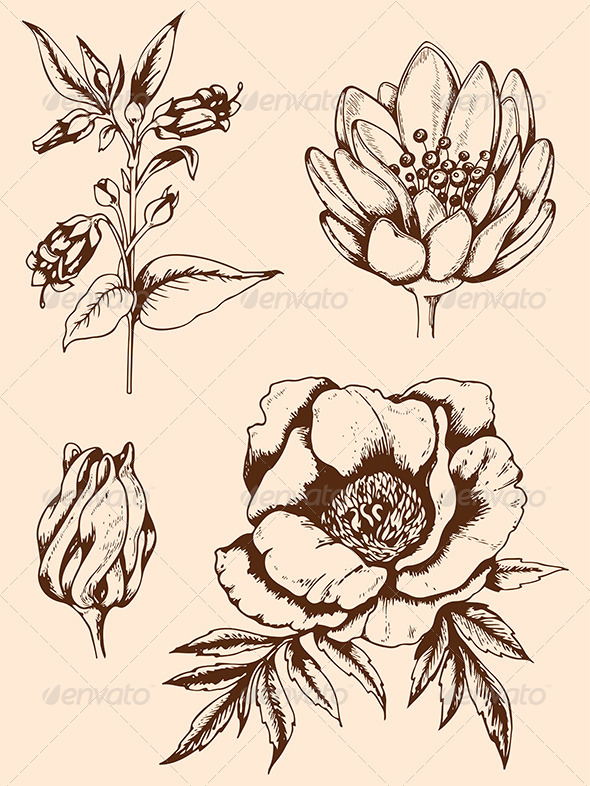 GraphicRiver Vintage Hand Drawn Flowers 7601325