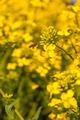 Bee Flies to Flower - PhotoDune Item for Sale