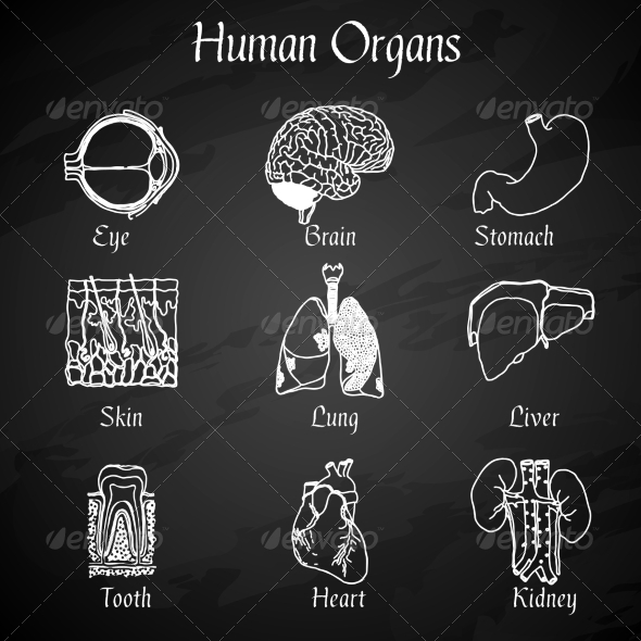 GraphicRiver Human Organs Chalkboard Icons 7606617