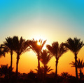 beautiful sunset with palm trees - PhotoDune Item for Sale