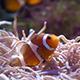 Aquarium - VideoHive Item for Sale