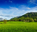 Alpine meadow in Bavaria,  Germany