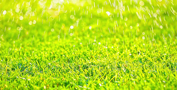 Green Grass 5