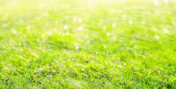 Green Grass 9
