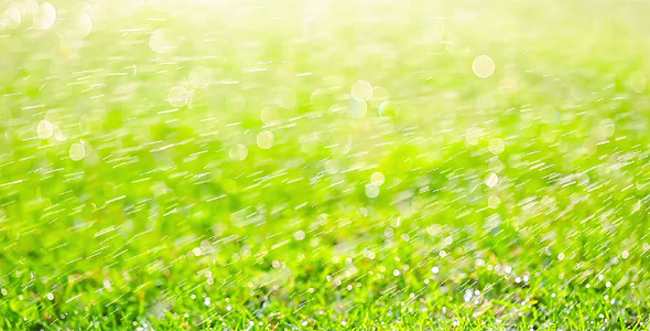 Green Grass 10