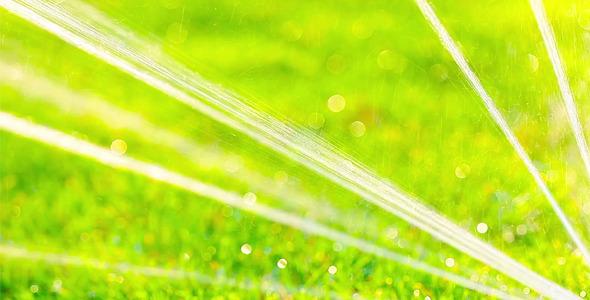 Green Grass 13
