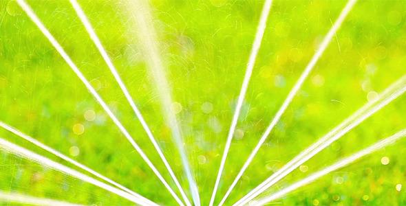 Green Grass 16