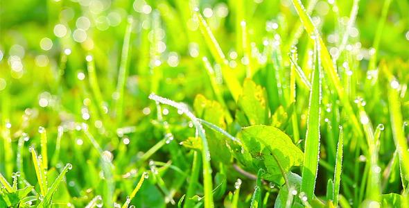 Green Grass 20