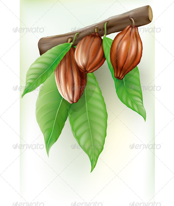 Branch with Fruit Cocoa