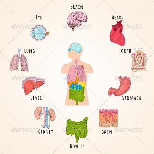 GraphicRiver Human Anatomy Concept 7631725