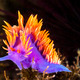 Colorful nudibranch - PhotoDune Item for Sale