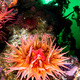 Anemone feeding - PhotoDune Item for Sale