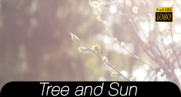 Tree And Sun Collection