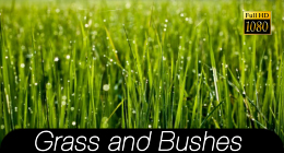 Grass And Bushes Footage Collection