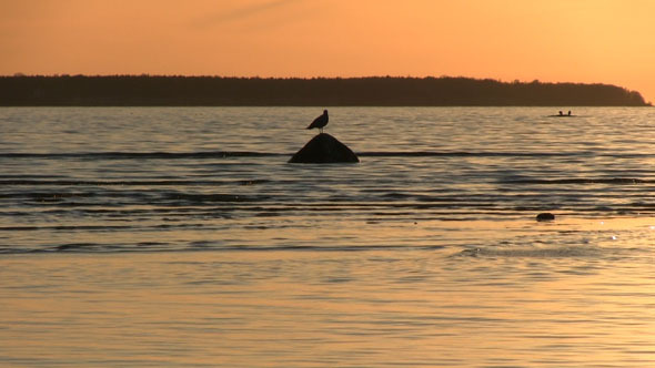 Bird On A Rock In The Sea With A Sunset