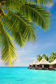 Coconut palm tree leaves over ocean with bungalows - PhotoDune Item for Sale