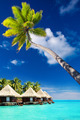 Palm tree on Moorea Island hanging over lagoon - PhotoDune Item for Sale