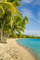 Palm trees over tropical lagoon at Fiji - PhotoDune Item for Sale