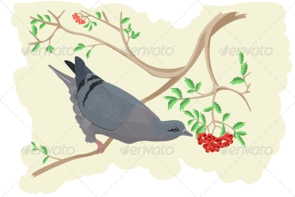 GraphicRiver Pigeon is Eating a Rowan 7673253
