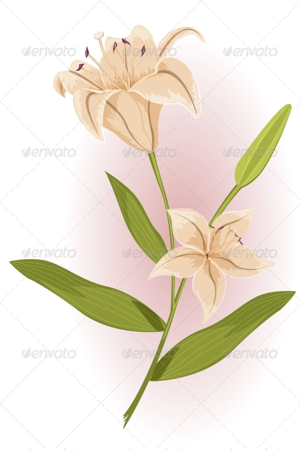 GraphicRiver Golden Lily 7673339