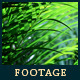 Green Leafs 16 - VideoHive Item for Sale