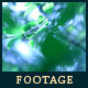 Forest 19 - VideoHive Item for Sale